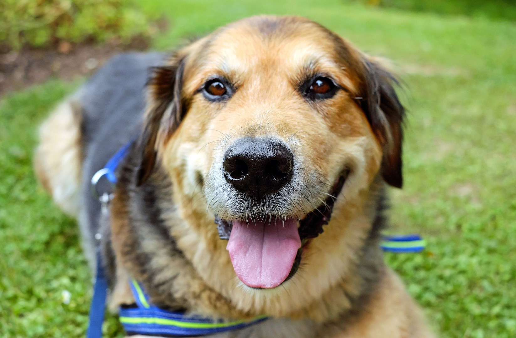 Teaching shelter dogs new tricks: from rescue to service dog