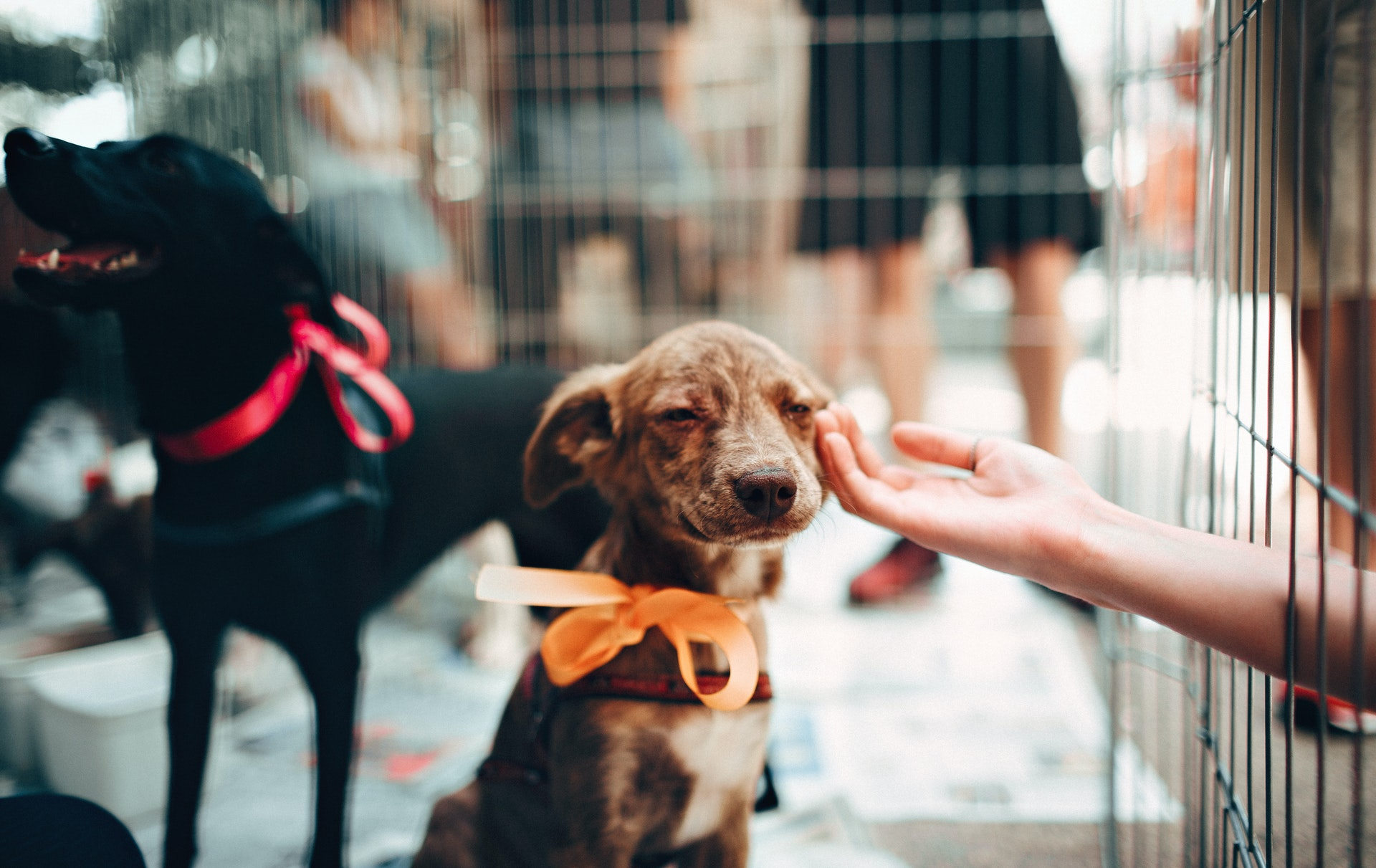 Best practices to help save shelter animals on social media